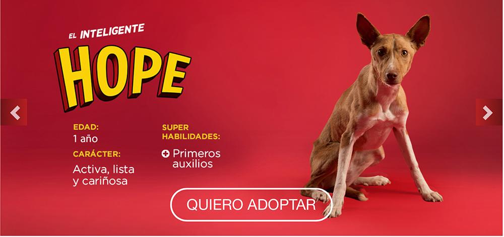 Campaña Superdogs